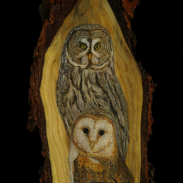 A Parliament of Owls - Colored Pencil Drawing on Rustic Cherry Wood