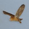 Barn Owl Needle Felted Wool Painting